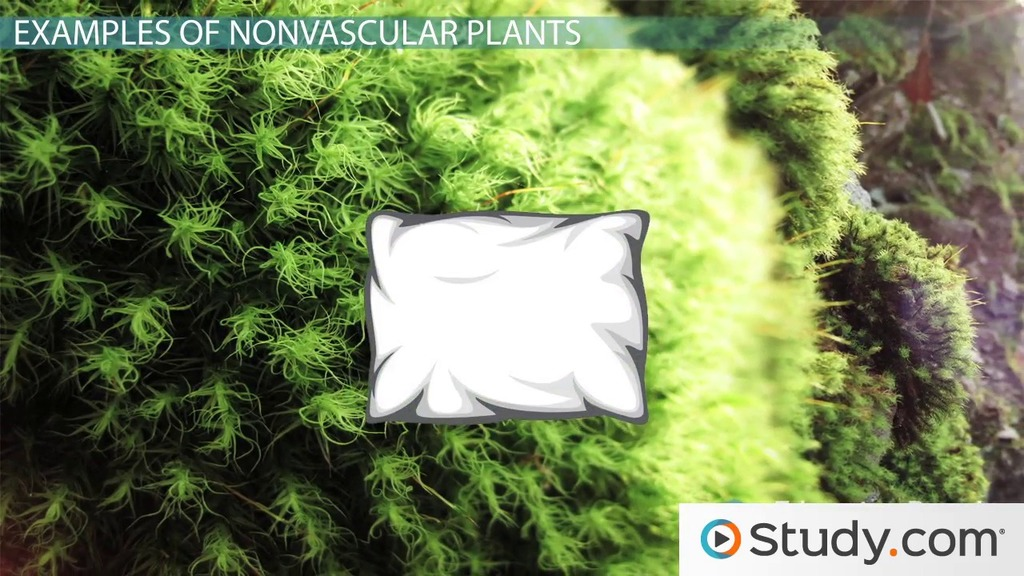 How do nonvascular plants reproduce sexually