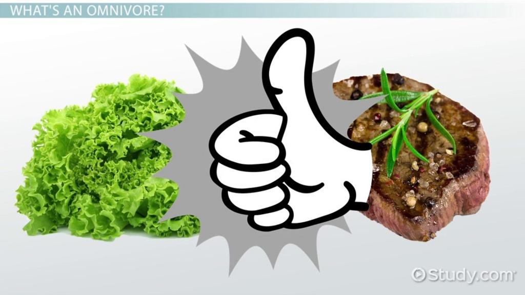 Omnivores Definition Examples Video Lesson Transcript Study