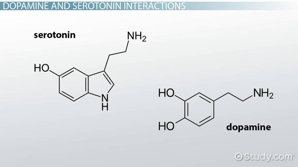 neurotransmitters dopamine and serotonin relationship