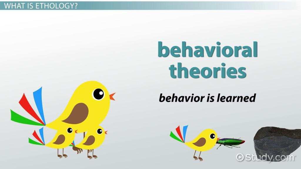 Ethological Theory: Definition & Explanation - Video