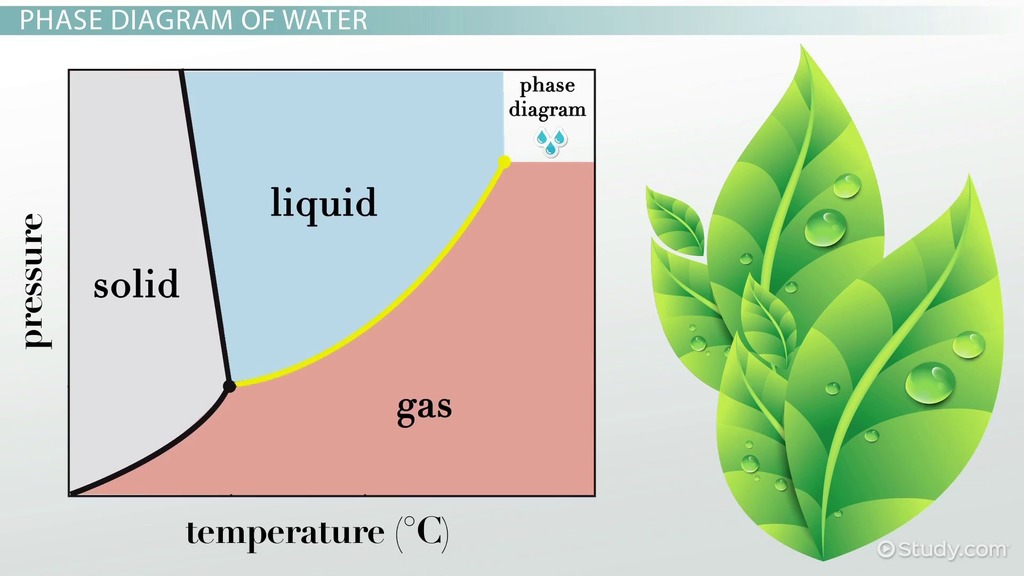 Phase Diagram Of Water Vs Other Substances Differences Meaning