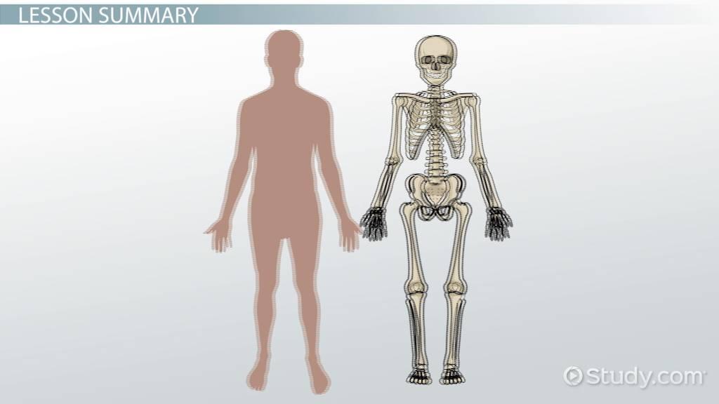 Endoskeleton Exoskeleton Lesson For Kids Video Lesson