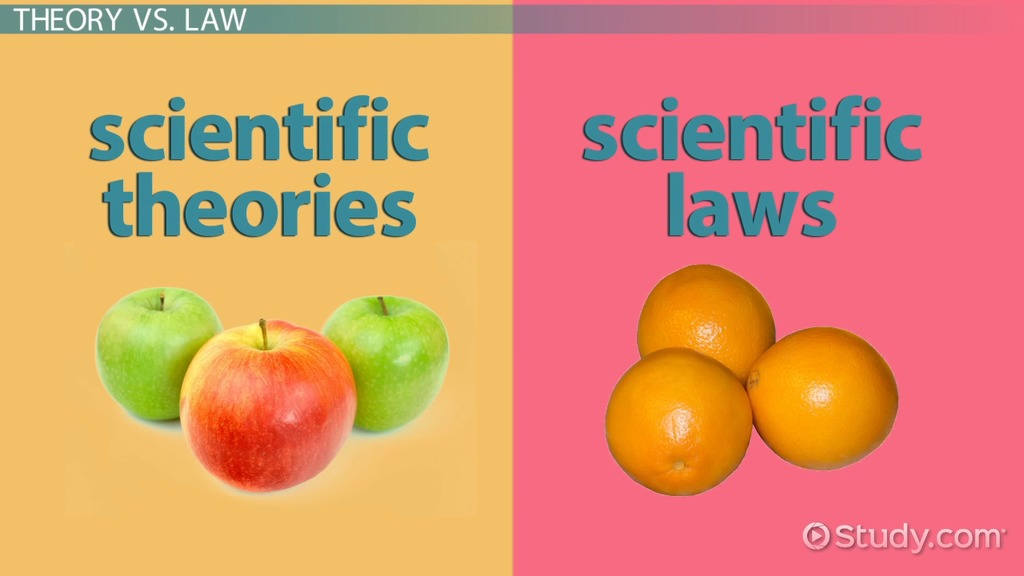 Hypothesis, theory & law in science video & lesson transcript.