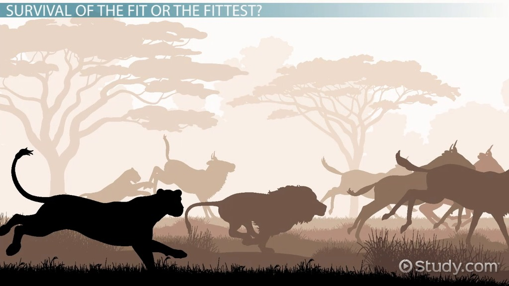 evolutionary fitness definition amp explanation video