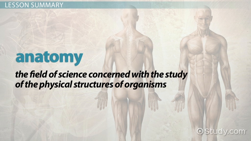 What Is Anatomy Definition History Video Lesson Transcript