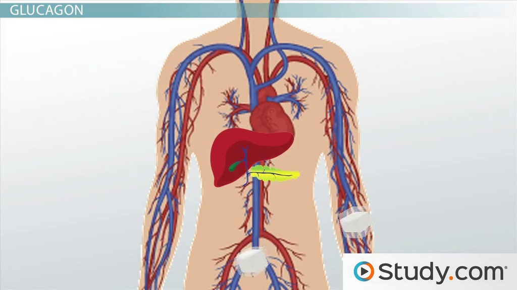 Creatine Phosphate System   Taekwondo and the Energy Systems  SlidePlayer Lactic Acid System