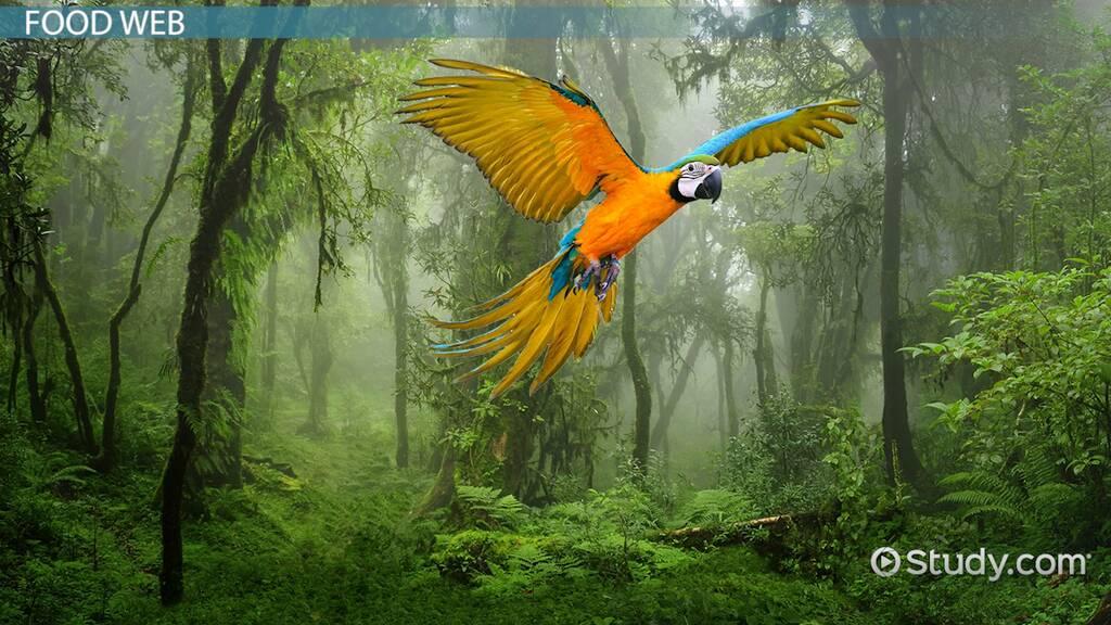 Amazon Rainforest: Ecosystem & Facts - Video & Lesson Transcript ...