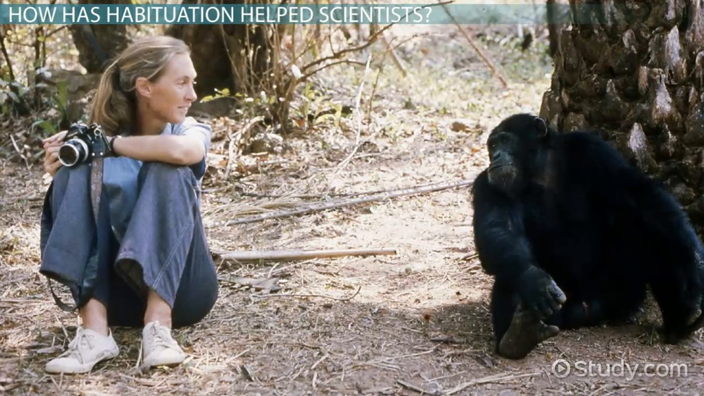 Habituation In Animals Definition Amp Example Video