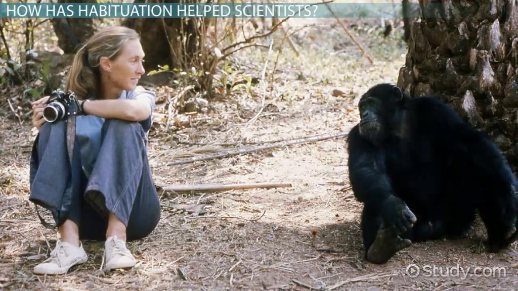 habituation in animals  definition  u0026 example