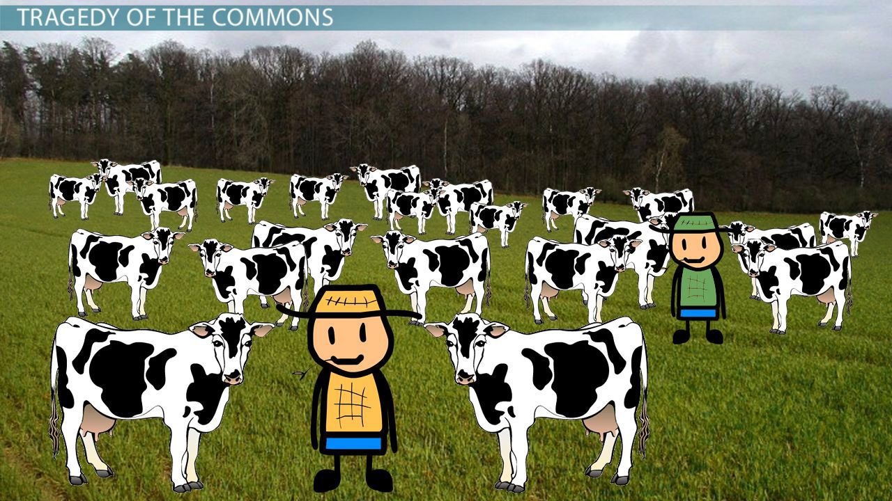 Tragedy Of The Commons Theory Definition Examples Video