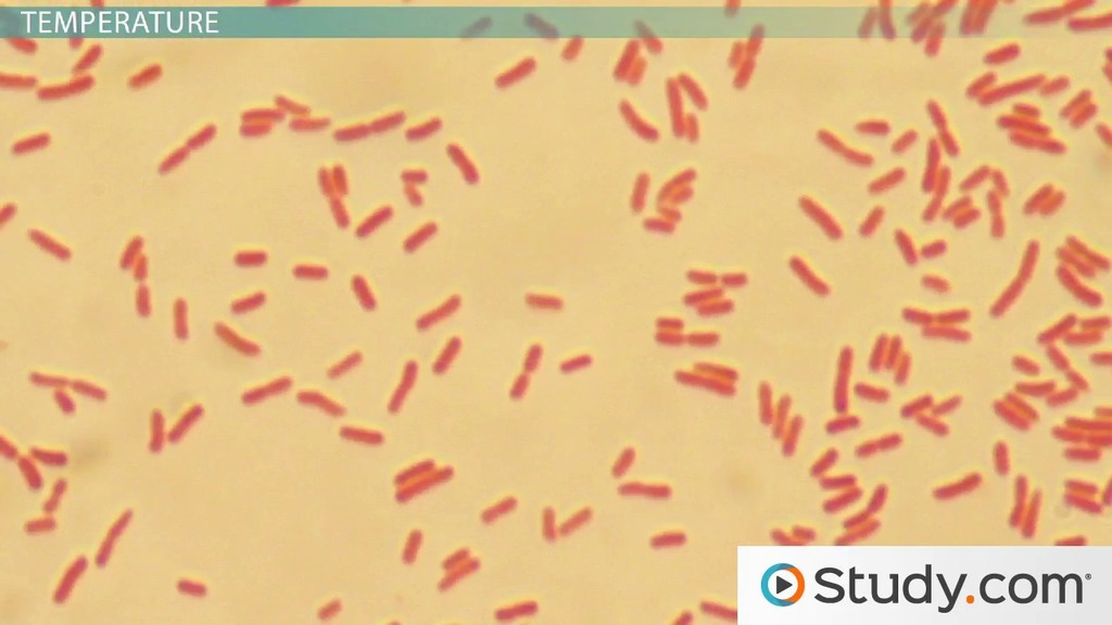 Growth requirements of e coli and auxotrophs video lesson growth requirements of e coli and auxotrophs video lesson transcript study fandeluxe Image collections