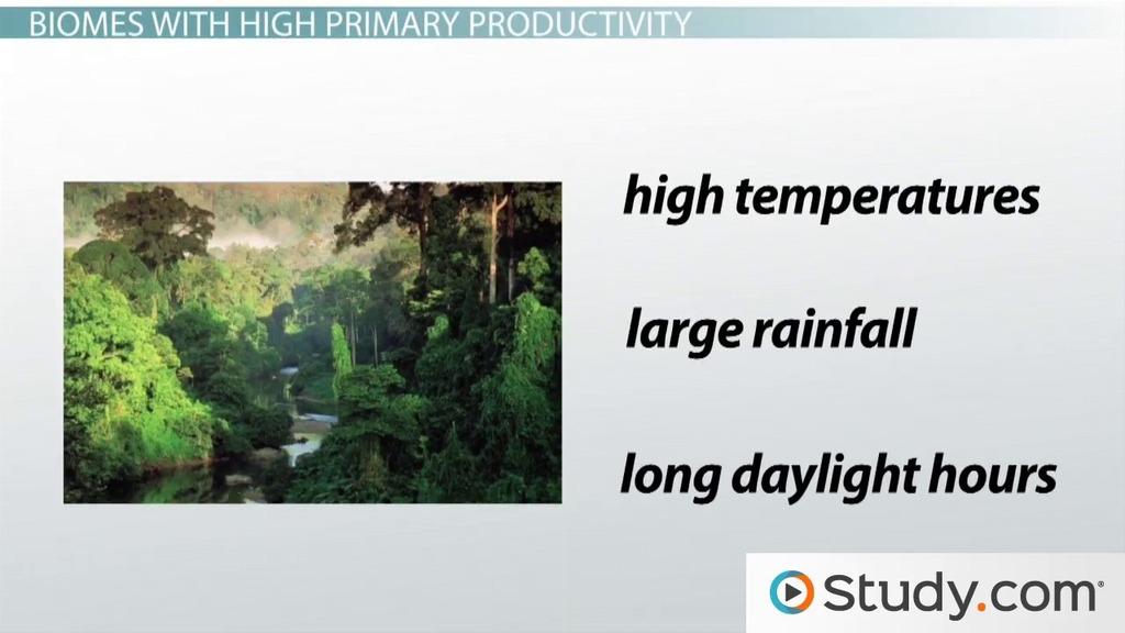 Primary Productivity Of Biomes Video Lesson Transcript Study