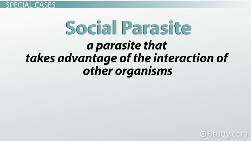 exemple epiparasite