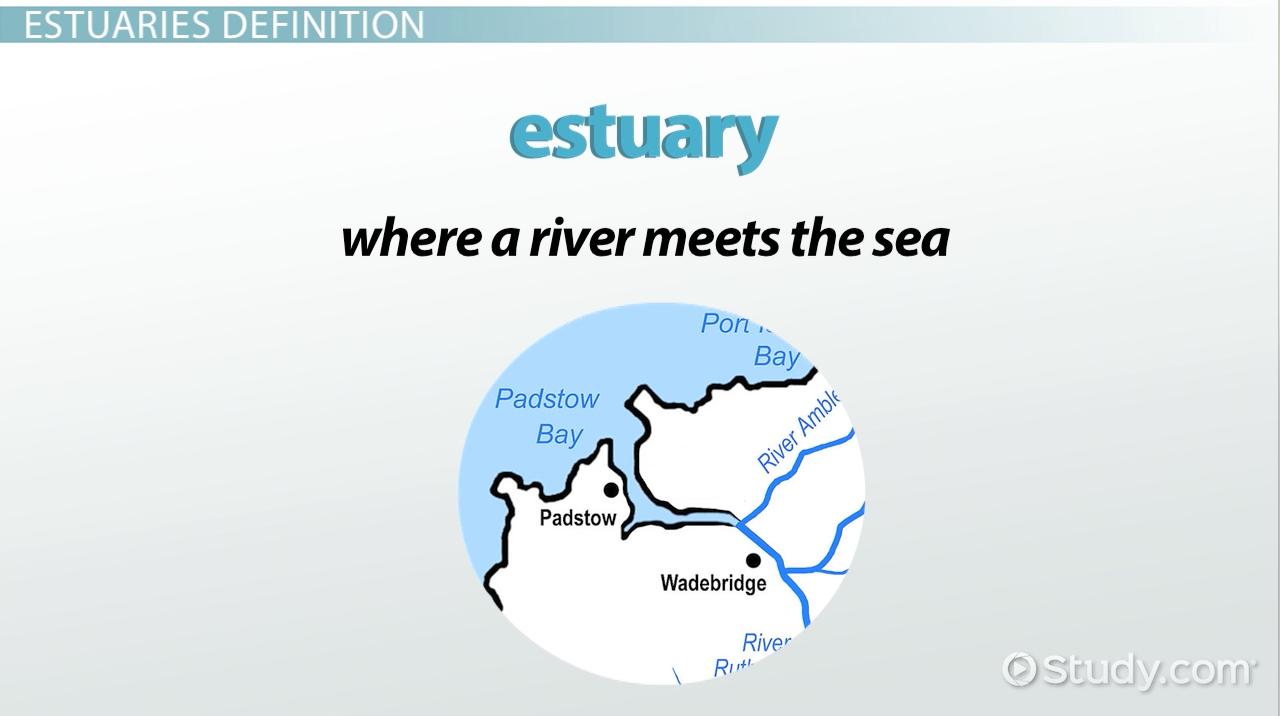 estuaries biome  definition  types  u0026 climate