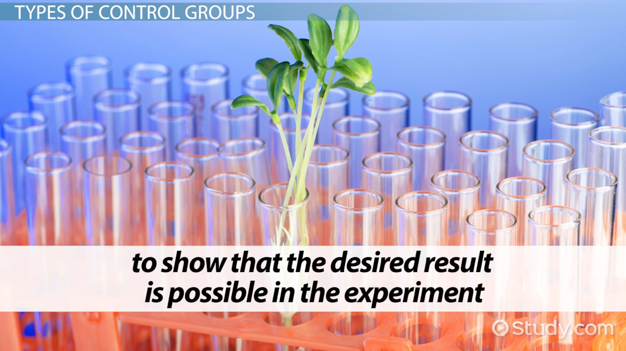 control group in scientific experiments essay