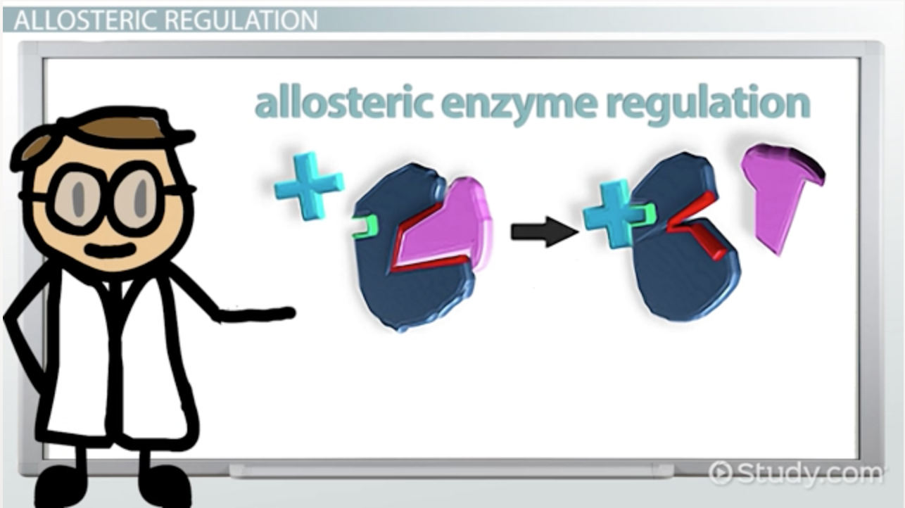 Research papers on enzymes