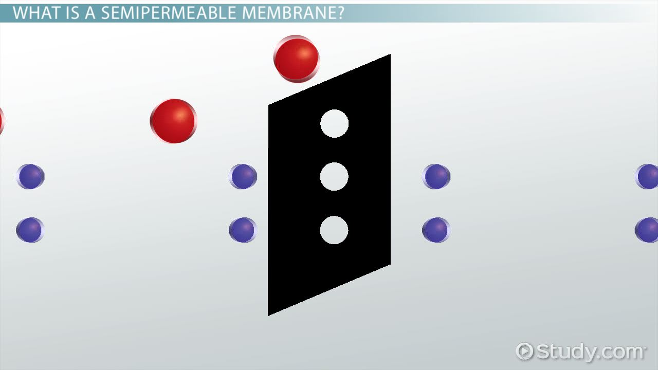 Semipermeable Membrane: Definition & Overview - Video & Lesson ...