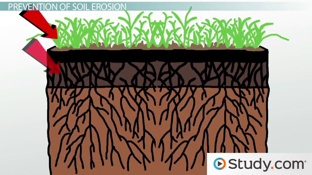 Soil Erosion Effects Prevention Video Lesson Transcript