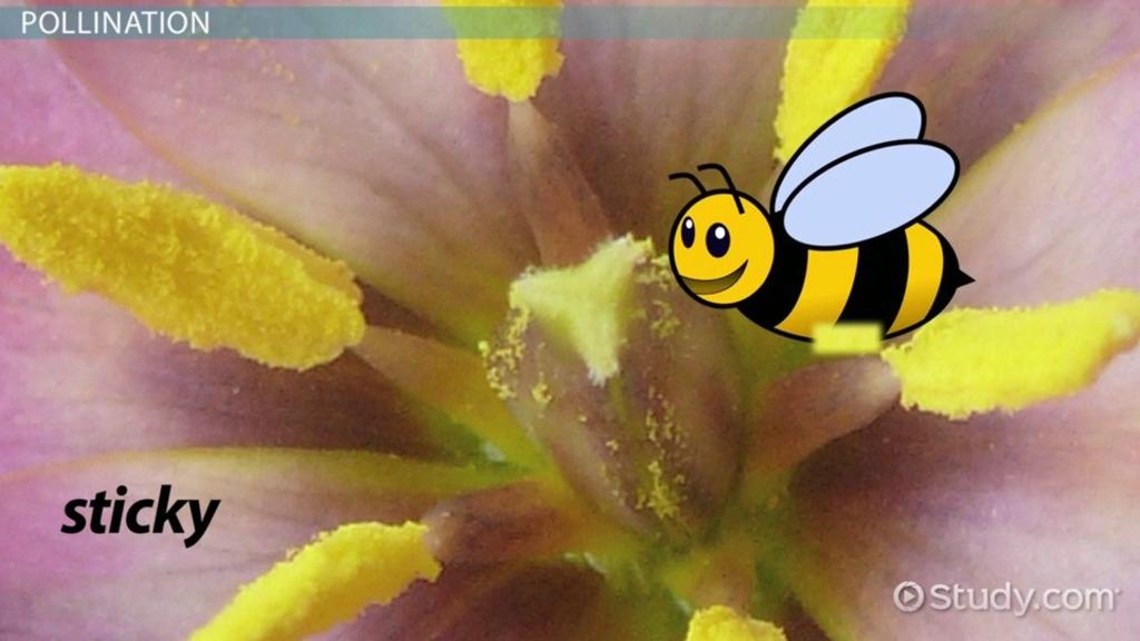 Stamen of a Flower: Definition, Function & Design
