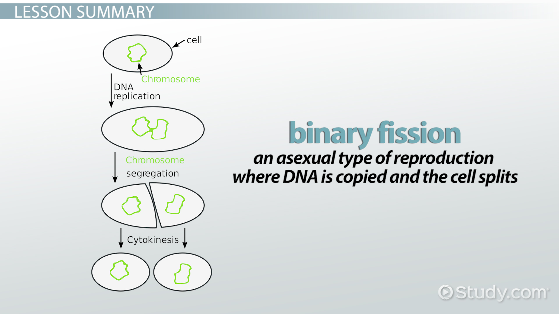 Bacteria reproduce asexually by binary fission define