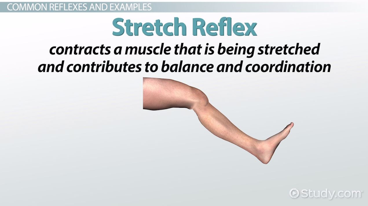 Reflex: Definition, Types & Examples - Video & Lesson Transcript ...