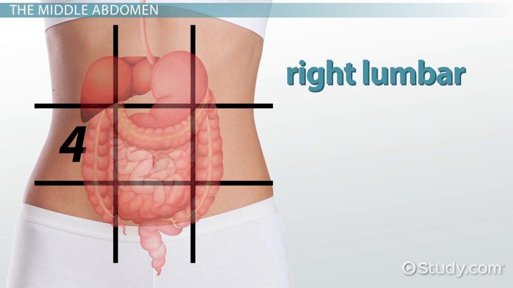 The 9 Regions Of The Abdomen on High Health Worksheet Printable