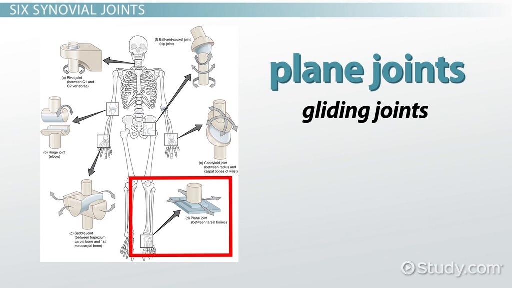 The Six Types of Synovial Joints: Examples & Definition - Video ...