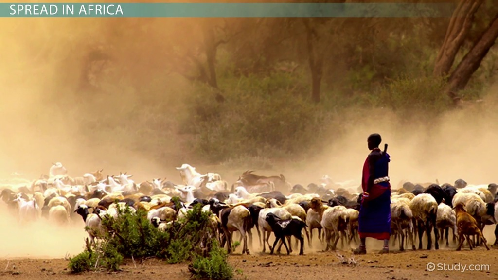 africa pastoralism agriculture spread study history