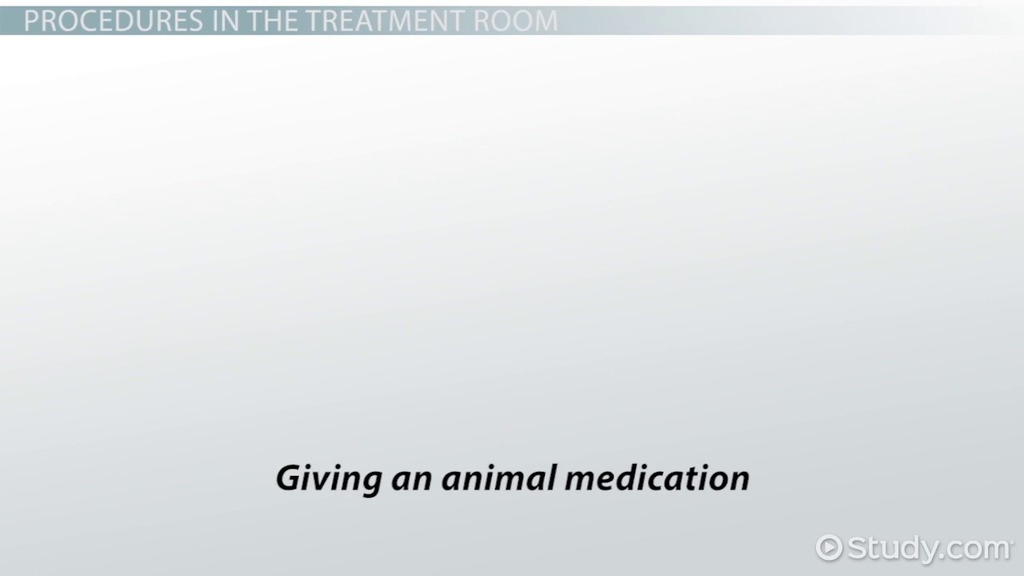 Common Veterinary Medical Forms & Their Importance - Video