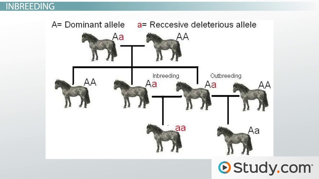Dog Cross Breeding Chart
