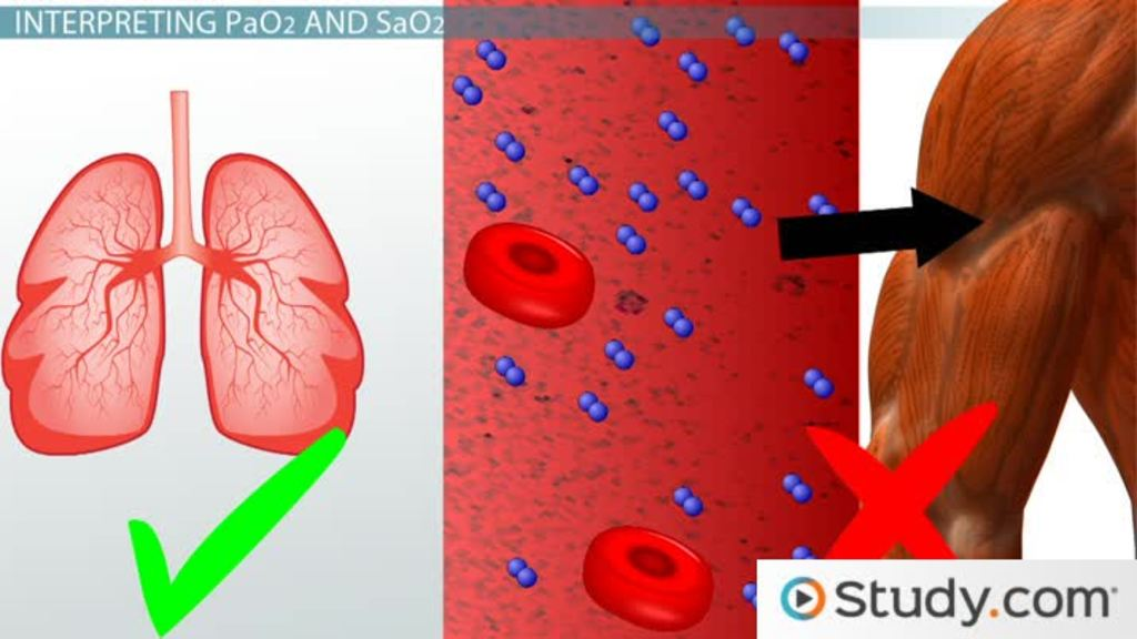 Gas Transport: Oxygen and Hemoglobin - Video & Lesson Transcript ...