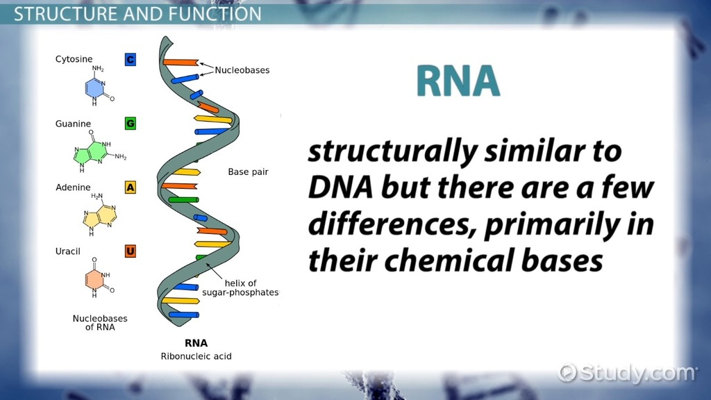 Genetic Makeup Of An Organism Cool Genetic Material Definition Structure Function Video Lesson