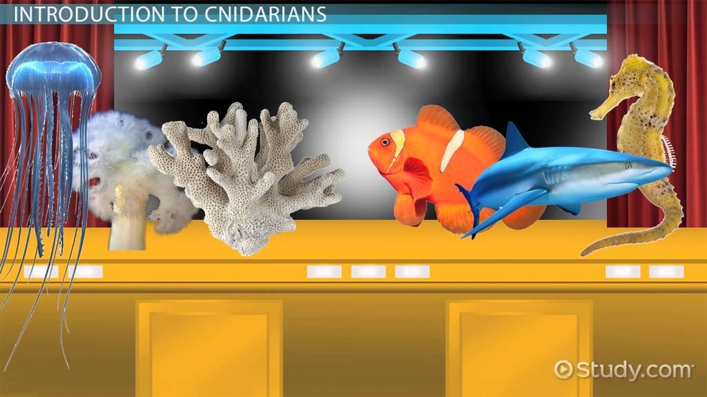 Cnidarians  Types  amp  Examples