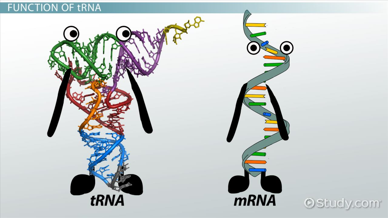 dna discovery essay