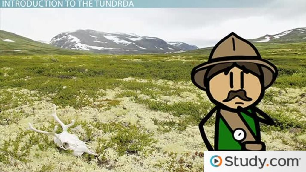 Tundra Biome Climate Locations Plants Animals Video Lesson