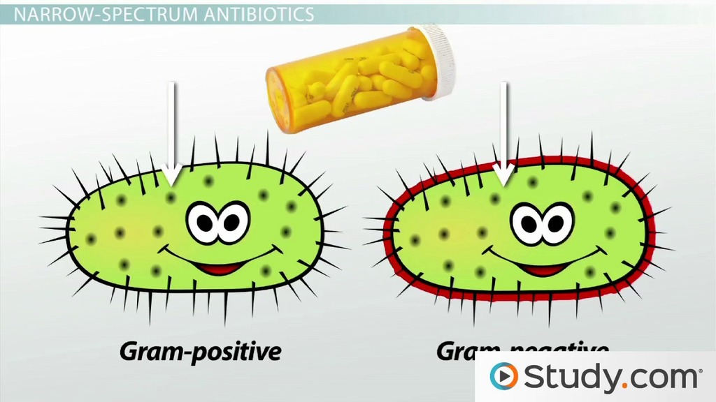 how to make antibiotics from plants