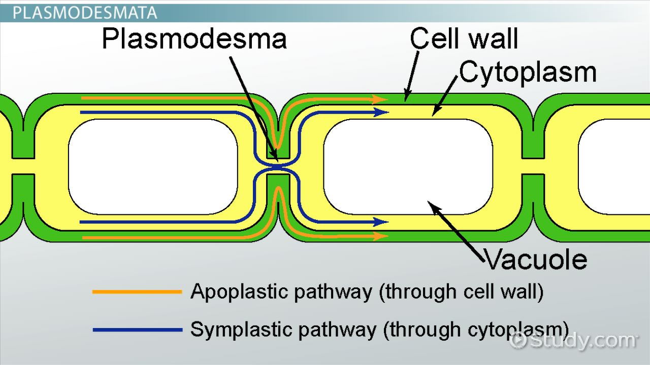 Types Of Cell Junctions