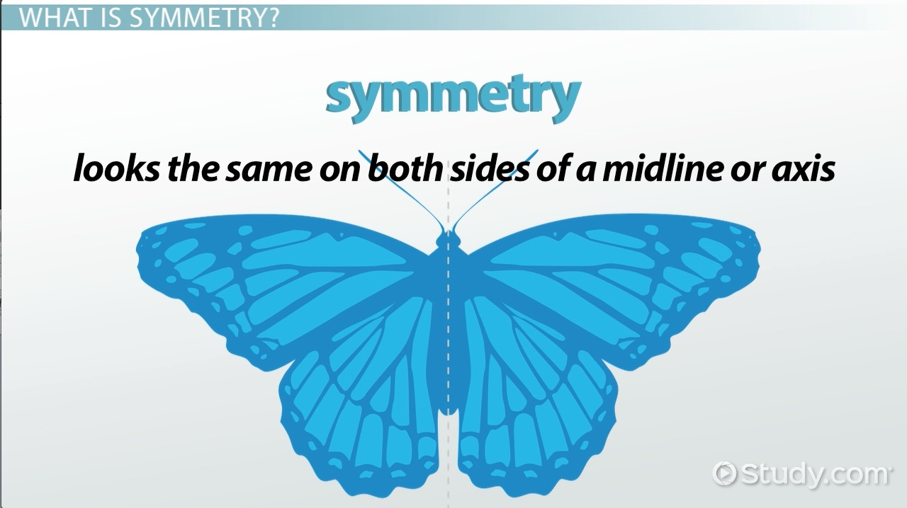 Workbooks symmetry worksheets for high school : Types of Symmetry in Animals - Video & Lesson Transcript | Study.com