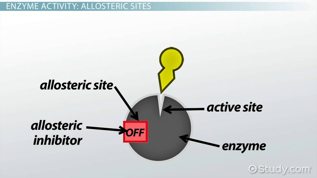 what is an allosteric site of the enzyme definition biology video lesson transcript studycom