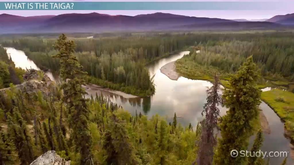 taiga biome  environmental issues  u0026 threats