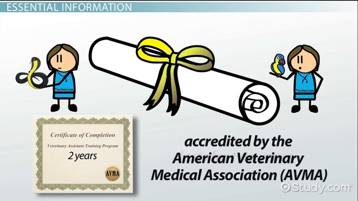 Veterinary Technician Education Requirements And Training Info