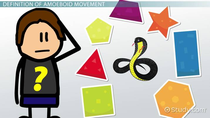 What is Amoeboid Movement?