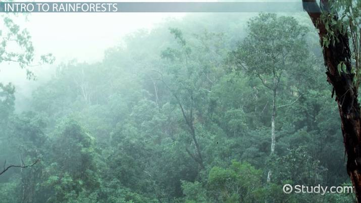 What Are Tropical Rainforests? - Definition, Plants & Animals Rainforest Houseplants on