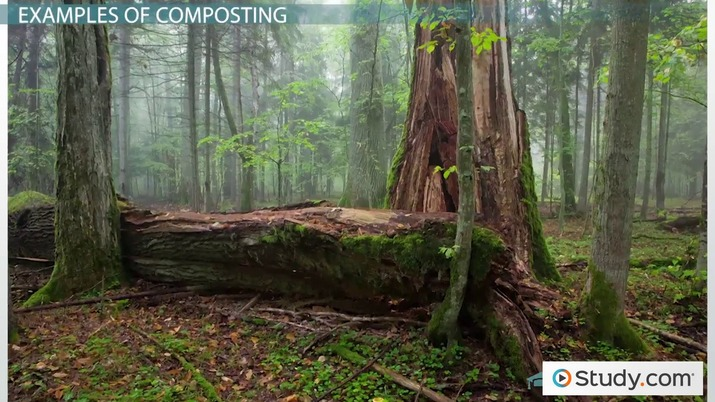 What Is Composting? - Definition and Examples - Video & Lesson
