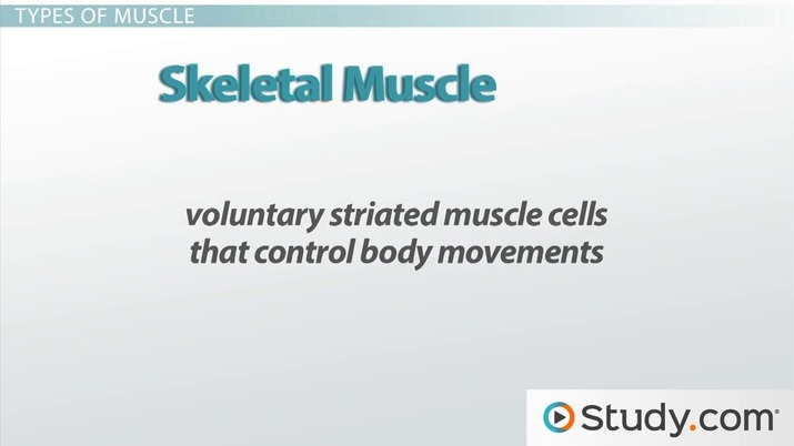 Skeletal System And Muscular System Video Lesson