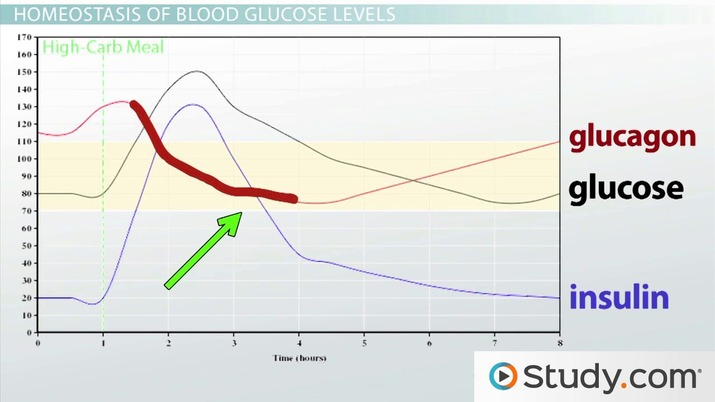 Homeostasis of Glucose Levels: Hormonal Control and Diabetes - Video