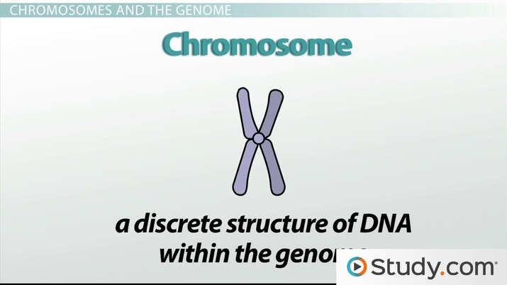 Genetics Heredity Traits Chromosomes Video Lesson