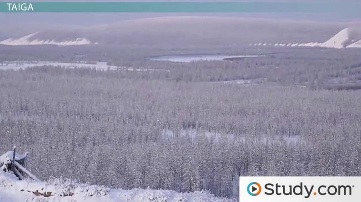 Biomes: Tundra, Taiga, Temperate Grassland, and Coastlines