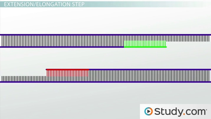 pcr: steps involved in polymerase chain reaction