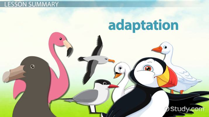 Webbed Feet Animals: Lesson for Kids - Video & Lesson